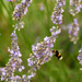 Busy Bee by helenw2