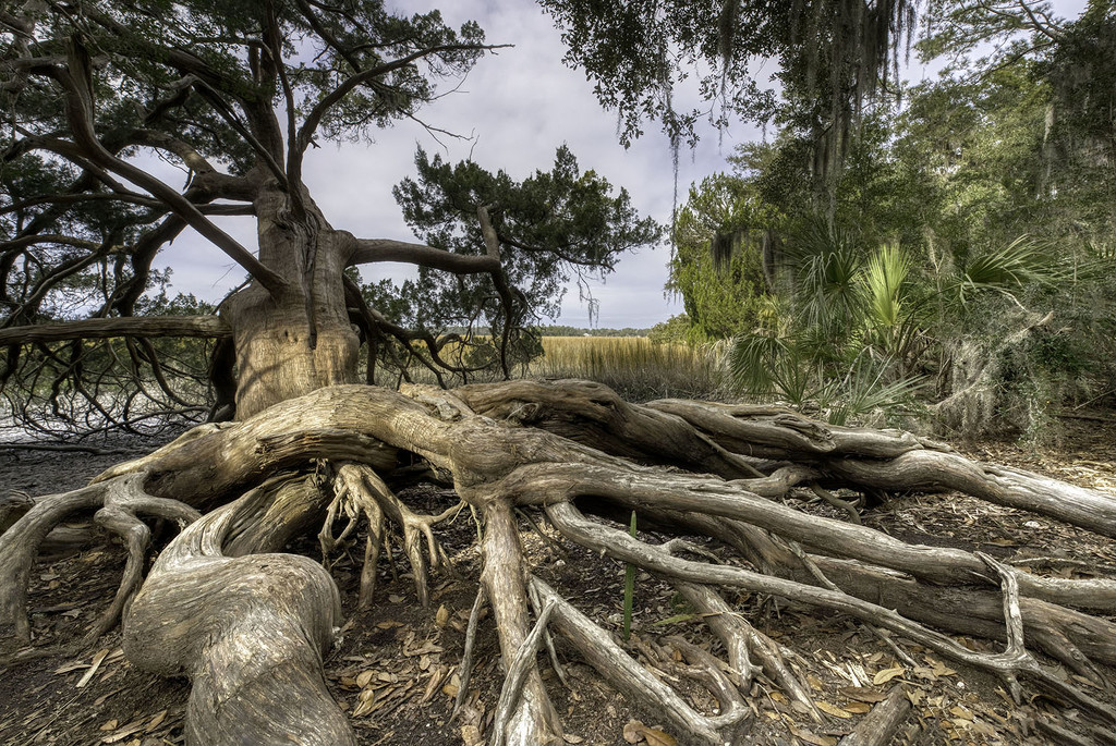 Rooted by kvphoto