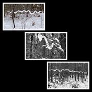 8th Jan 2021 - Snow Snakes!