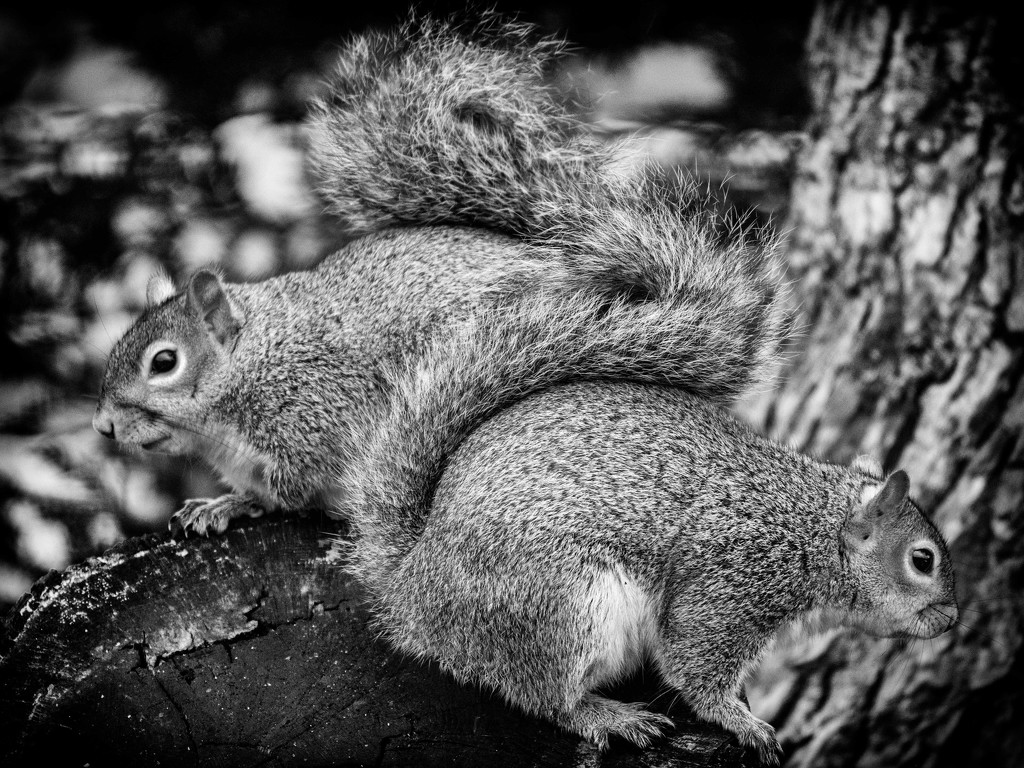 S for Squirrel. by gamelee