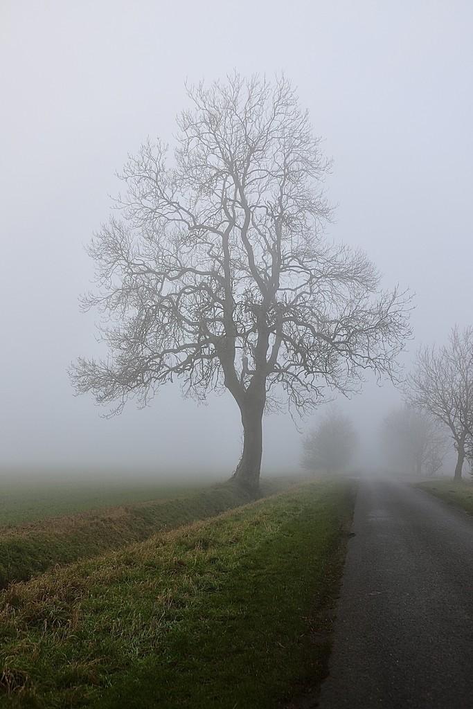 Skeleton Tree by carole_sandford
