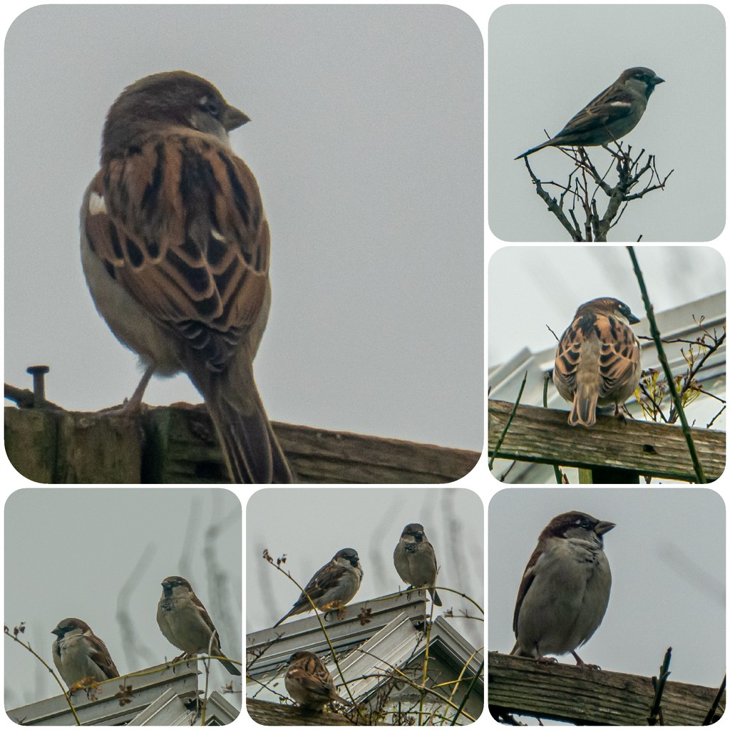 Sparrows by mave