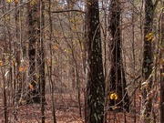 9th Jan 2021 - Winter woods...