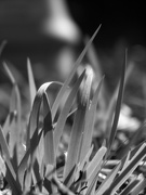 9th Jan 2021 - Fresh and new blades of grass...