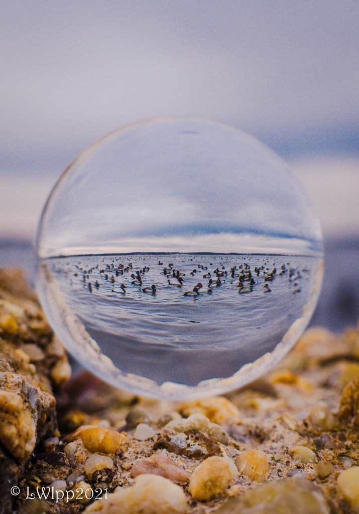 Ducks In A Ball  by lesip