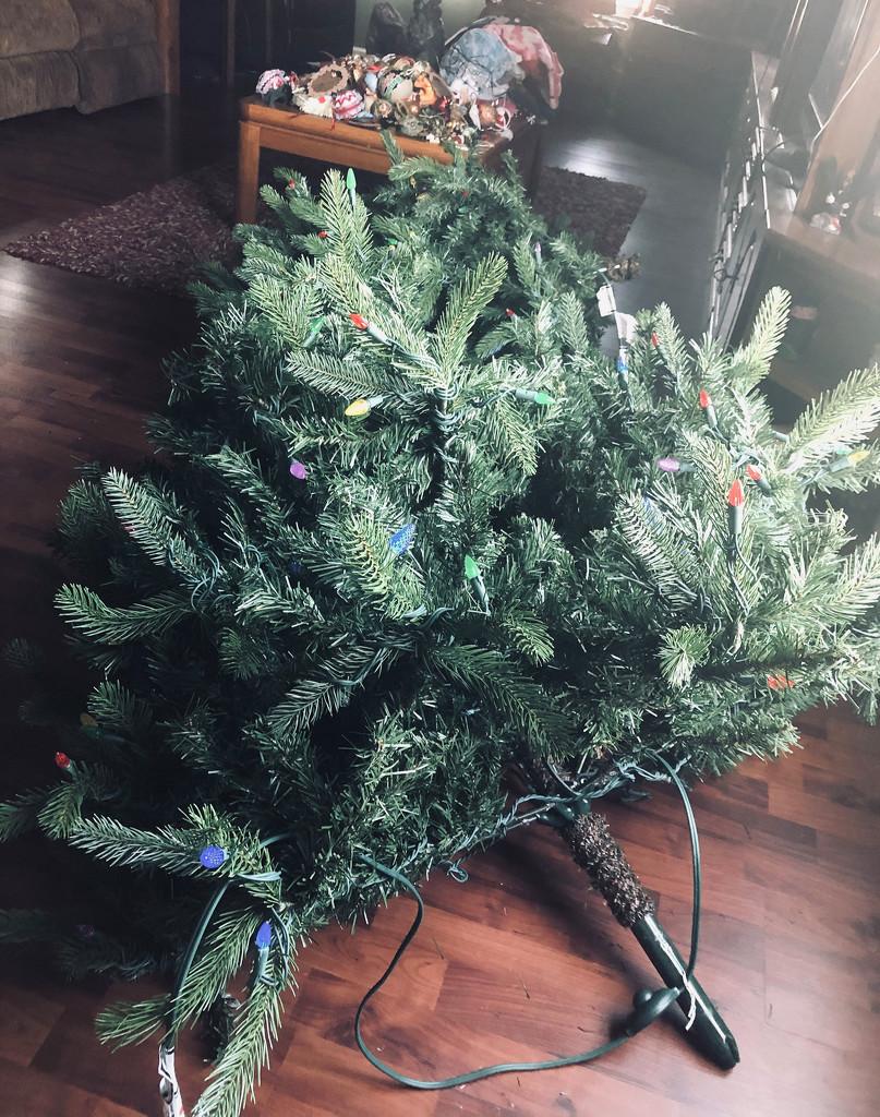 Lumberjack Lisa felled the Christmas tree by homeschoolmom