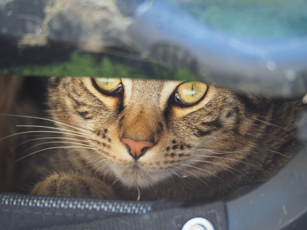 Cat under the canoe  by katford