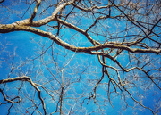 7th Jan 2021 - The Life of Trees 7