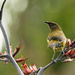 Bellbird by helenw2