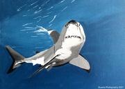 9th Jan 2021 - Sharks tail
