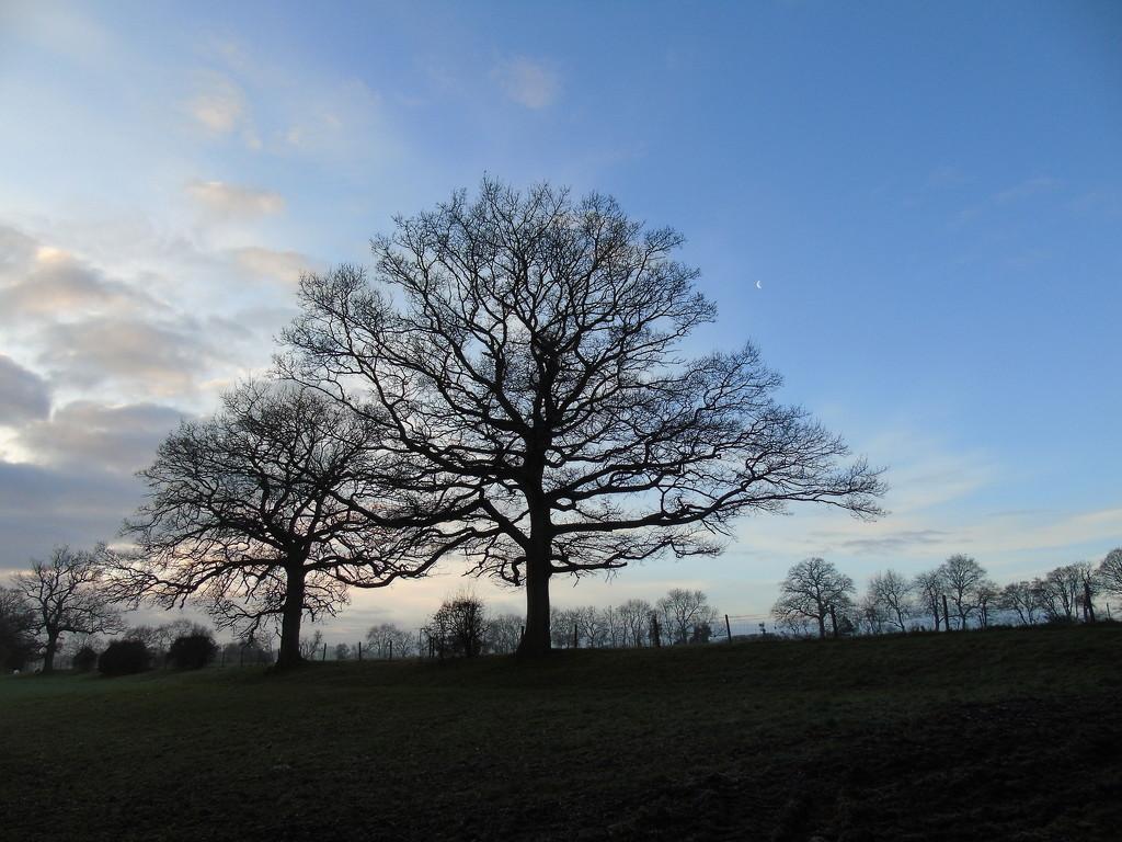 Stark Tree by bulldog
