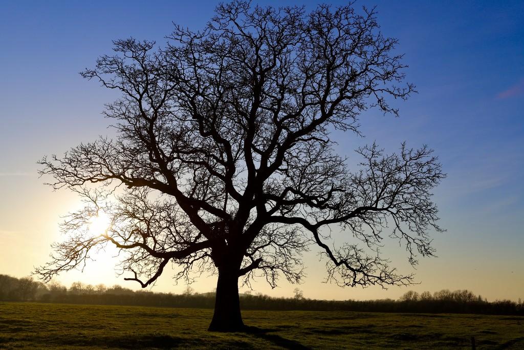 Skeleton Tree 2 by carole_sandford