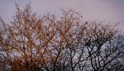 9th Jan 2021 - Winter Evening