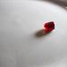 Backlit pomegranate seed