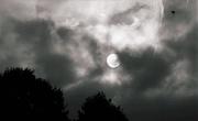 9th Jan 2021 - Moonlight Shadows
