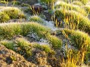 9th Jan 2021 - frosty moss