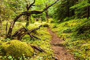 9th Jan 2021 - Hiking Trail