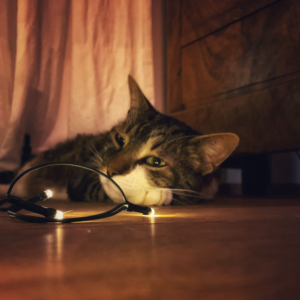 Cat and lights.  by cocobella