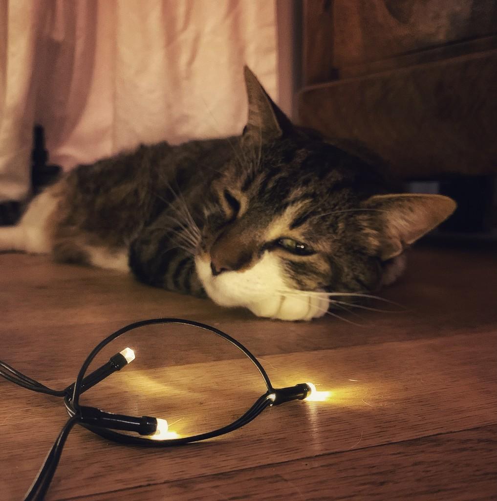 Sleeping.  by cocobella