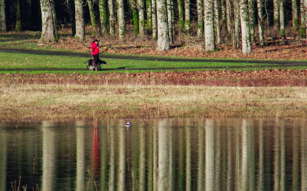 Red - Walking the Dogs by granagringa