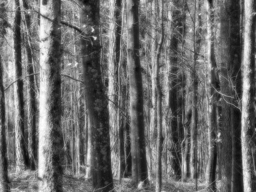 Timbered lines... by marlboromaam