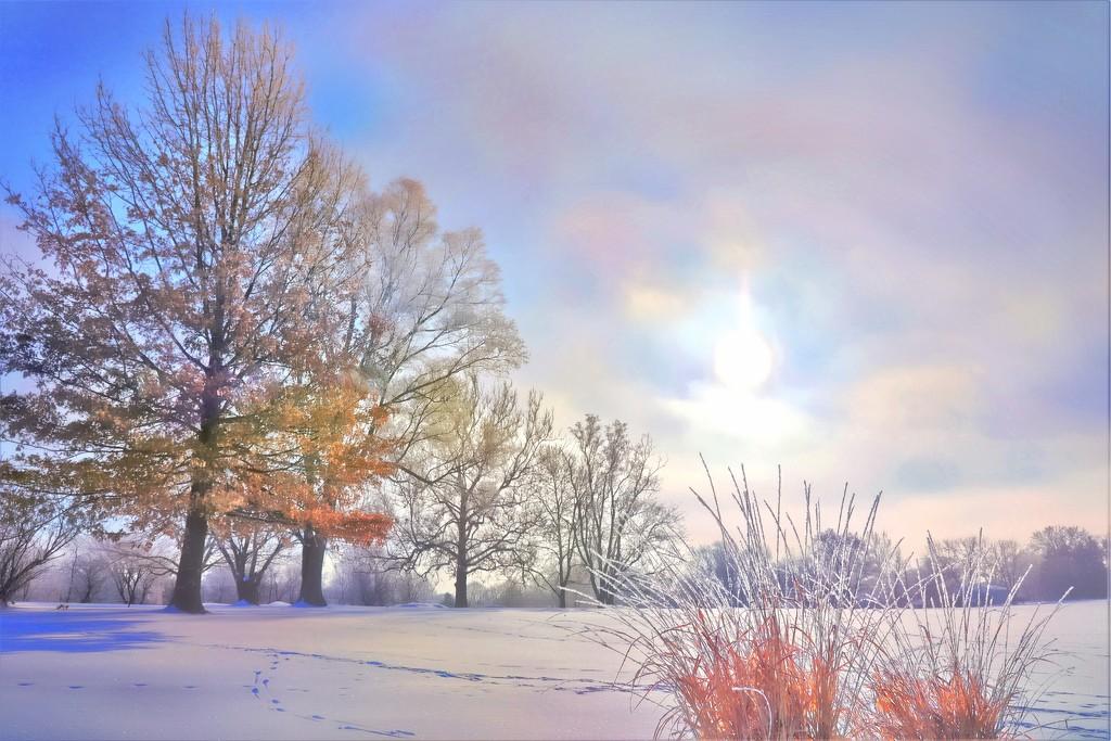 Winter Morning by lynnz