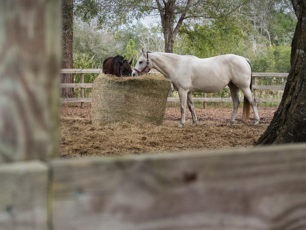 Framed Horses by regex