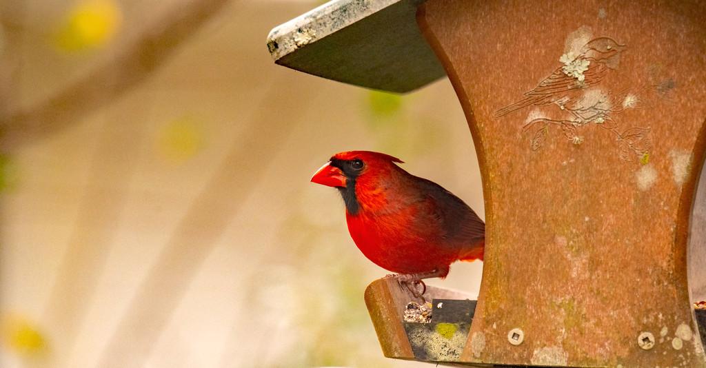 Mr Cardinal Found the Feeder! by rickster549