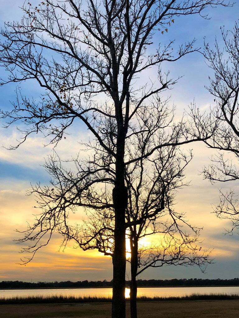 Winter tree and sunset along the Ashley River by congaree
