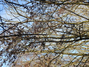 5th Jan 2021 - Branches