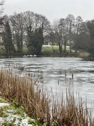 10th Jan 2021 - Frozen pond