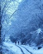 9th Jan 2021 - A Snowy Walk!