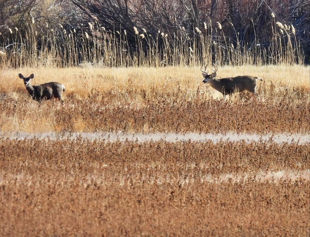 Deer by janeandcharlie
