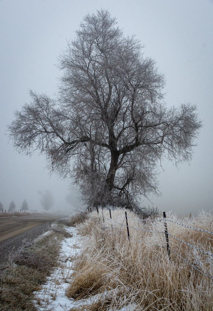 Foggy Morning by 365karly1