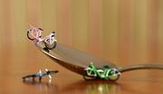 8th Jan 2021 - 3 bikes & 1 spoon