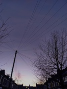 9th Jan 2021 - Telegraph wires
