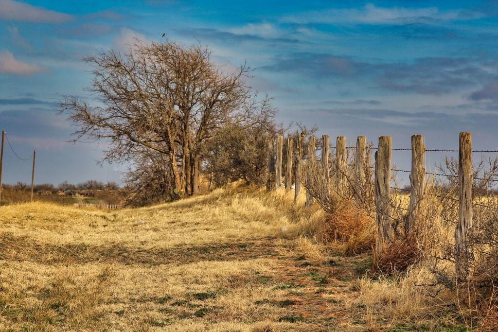 Fence Line by judyc57