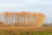 1st Jan 2021 - Golden Trees