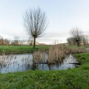 9th Jan 2021 - Pond in Field