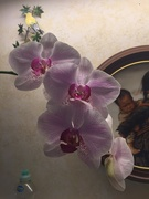 9th Jan 2021 - Dad's orchid has bloomed
