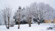 10th Jan 2021 - Winter storm