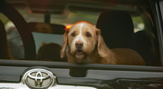10th Jan 2021 - Doggy Through the Back Window!