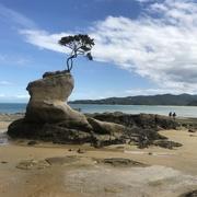 11th Jan 2021 - Tinline Bay
