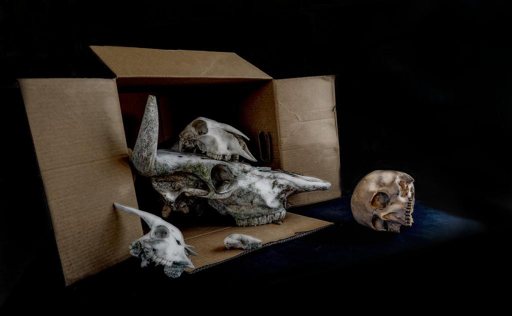 box set by graemestevens