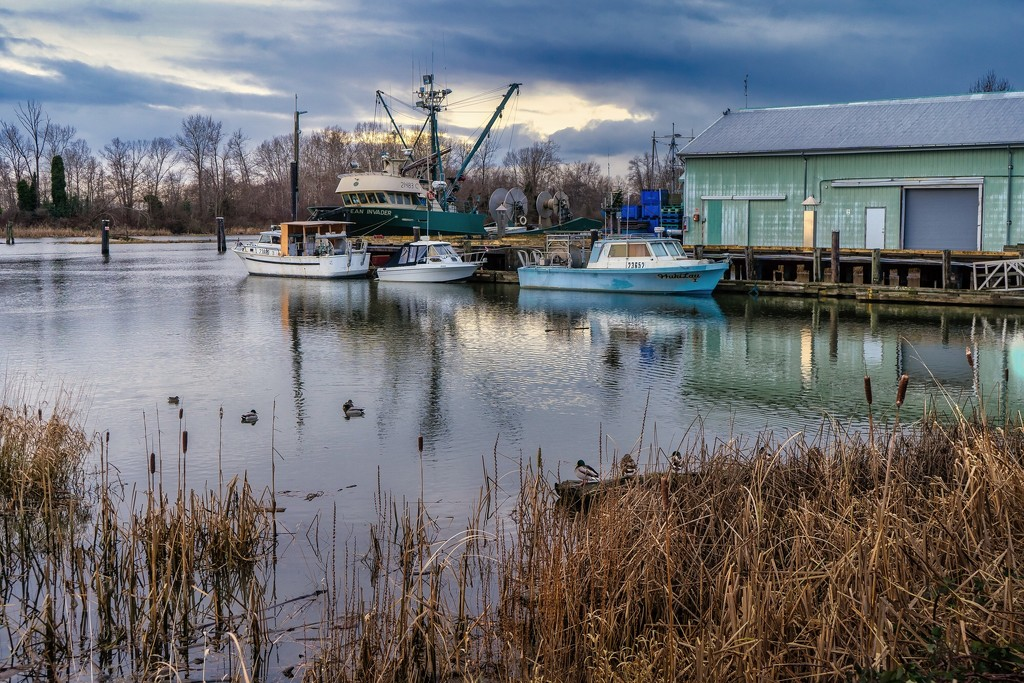 Woodward's Landing by cdcook48