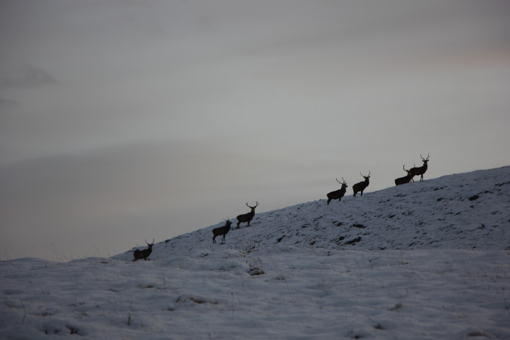Deer on the Hill by jamibann