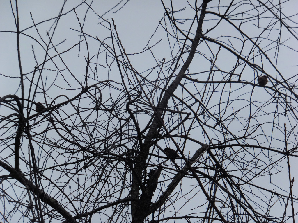 Bare Branches & Birds by linnypinny