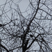 Bare Branches & Birds