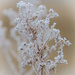 Ice Crystal Blossom
