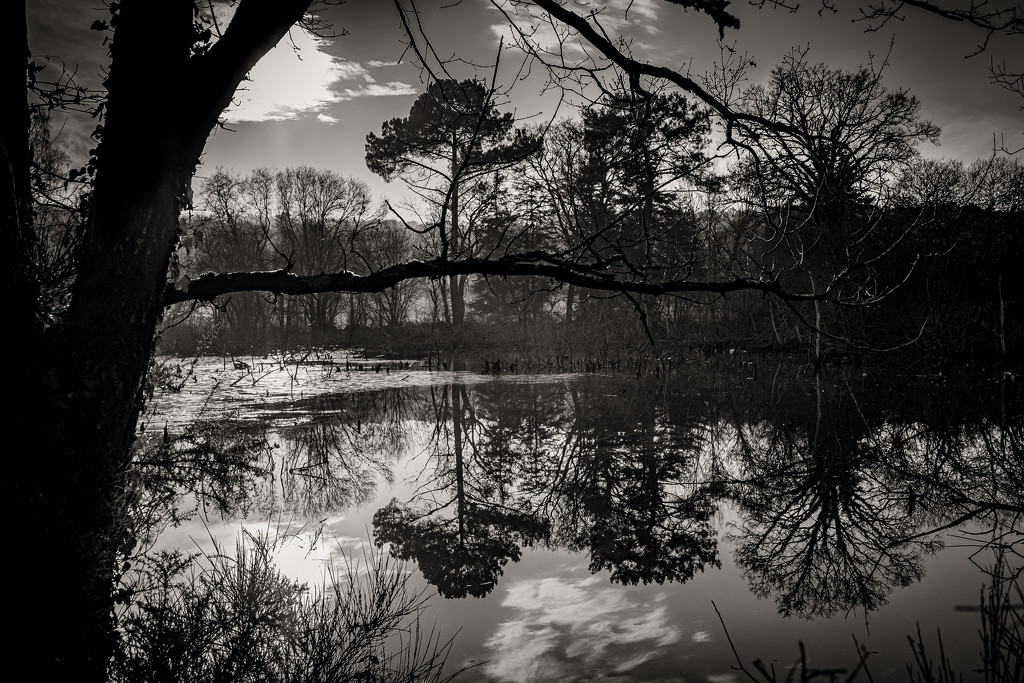 Trees Reflecting... by vignouse